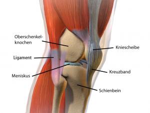 Übersicht über das komplexe Kniegelenk.