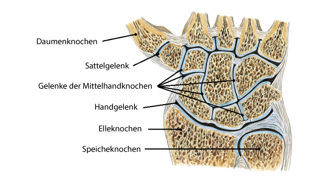 Daumenbasis Gelenkschmerzen