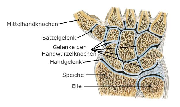 Arthrose in den Händen, Fingern und Daumen (Rhizarthrose) • Bewegen ...