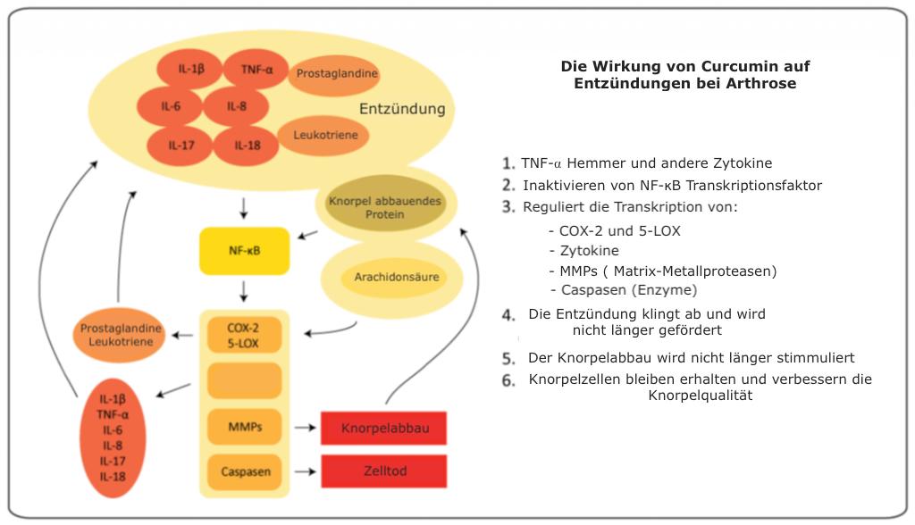 Wirkung Curcumin bei Entzündungen