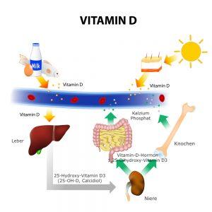 Die Vitamin-D-Synthese, Zeichnung Vitamin-D