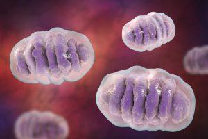 Mitochondriale-erkrankung-osteoporose