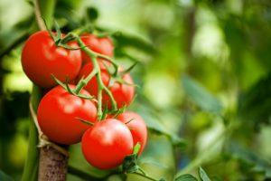 Tomaten-entzündungshemmende-lebensmittel