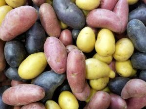 Kartoffeln-nachtschattengewächs