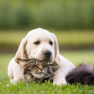 Flüssige Grünlippmuschel für gesunde Hunde- und Katzengelenke